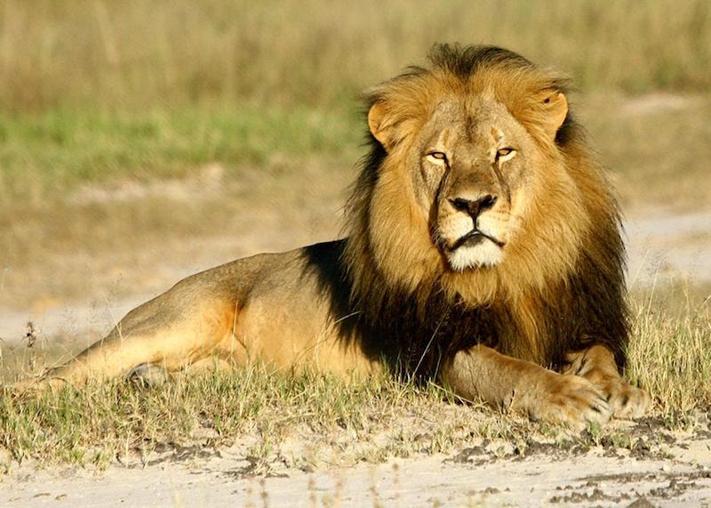 cecil an leon