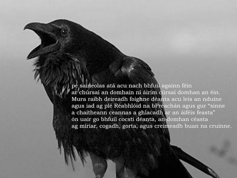 Crow_PROJECT_JPGs.073
